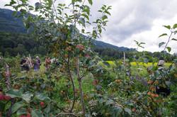 Permaculture Design