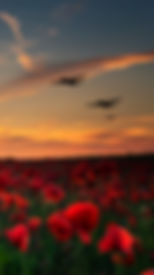 Lest we Forget poppy field with with WW1