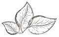 Stock & Sauce Logo Final-05-05.png