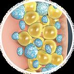 frozen-fat-cells.png