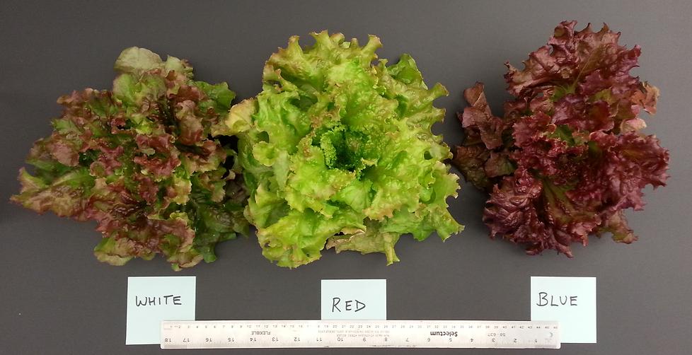Salad comparison