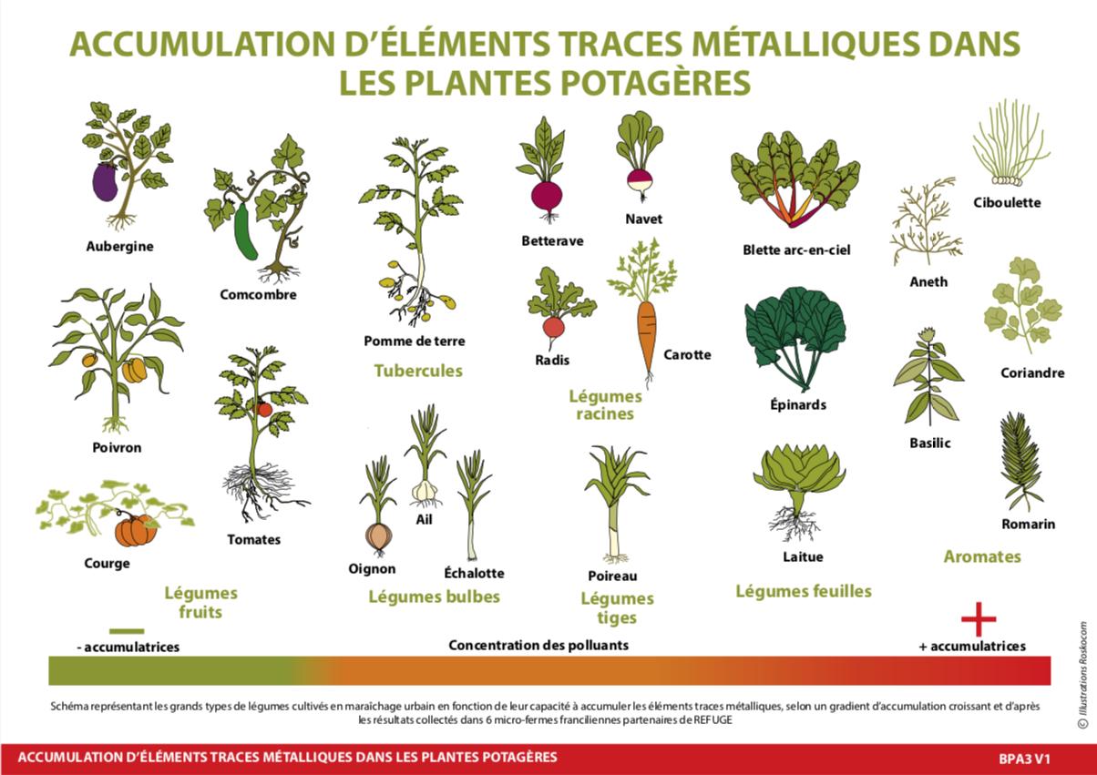 plantes_pms