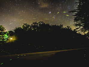 That Time Lightning Bugs Got In The Photo