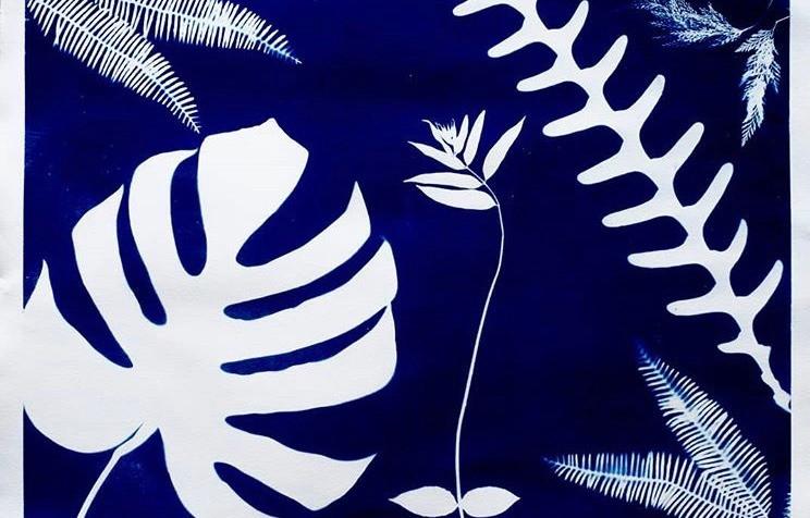 Cianótipo sobre papel aquarela de Carolina Braun