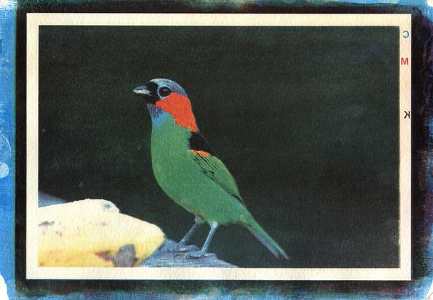 Goma 4 cores - Catia Riehl