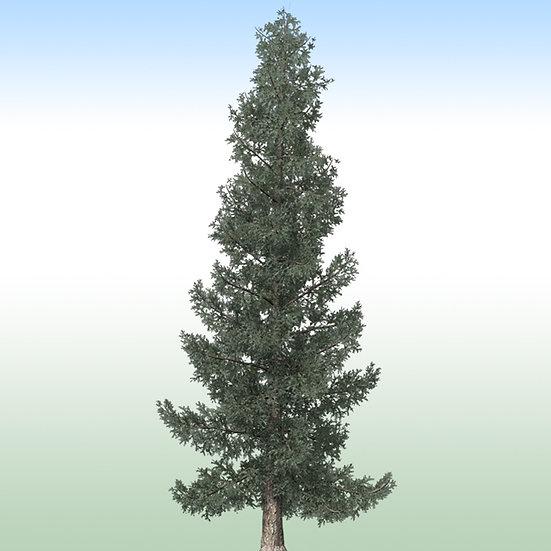 Blue Spruce Pack: In-App