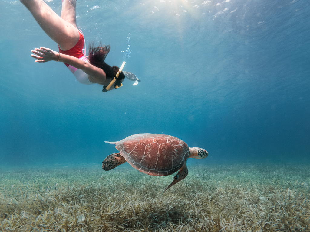 Sea Turtle at Tamarindo Beach