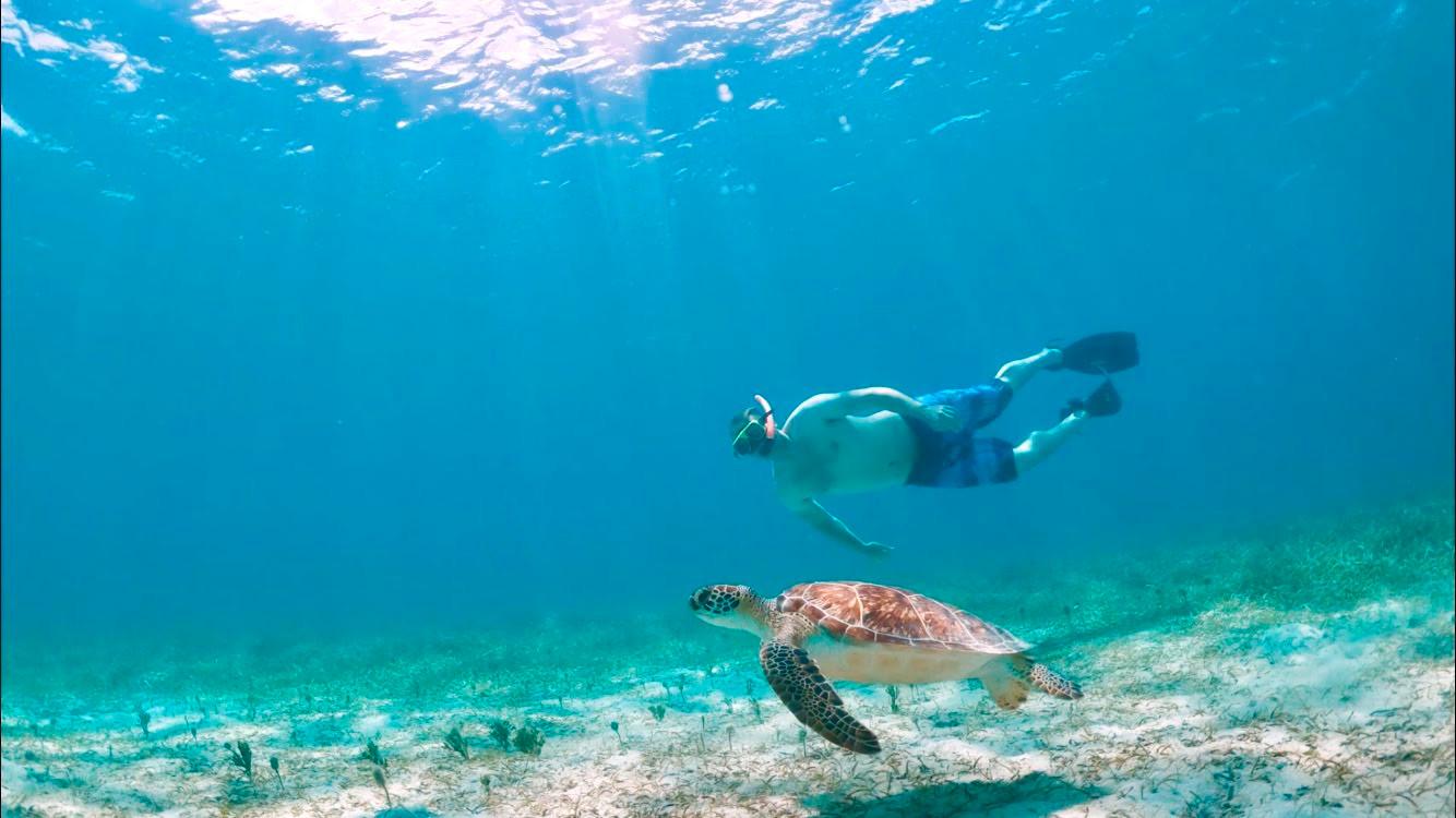 Sea Turtle Snorkelin Tamarindo