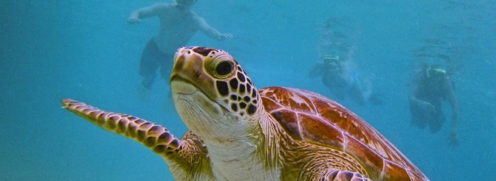 Sea Turtles Tararindo Beach