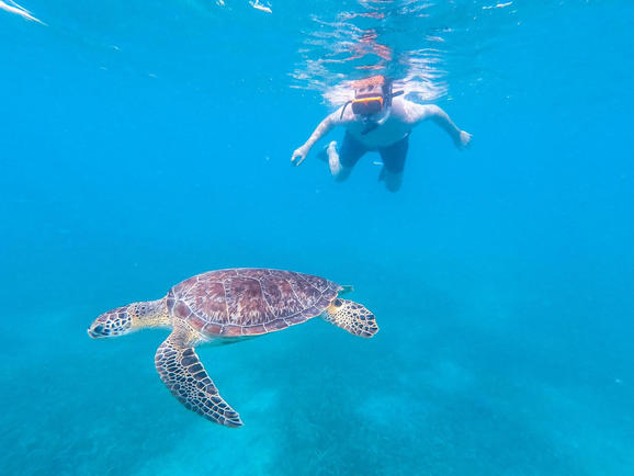 Culebra Island Sea Turtle