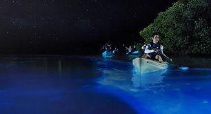 Bio Bay Vieques I VENTURES .jpeg