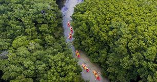 Bio Bay and Rainforest Combo Tour