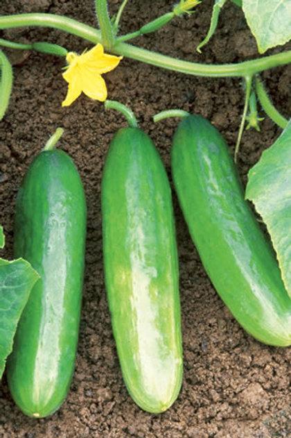 Cucumber Pack