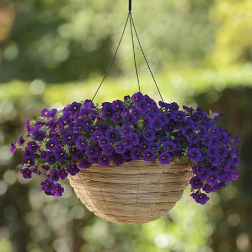 Calibrachoa: Blue Hanging Basket