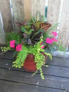 Mother's Day Mixed Planter: Shade