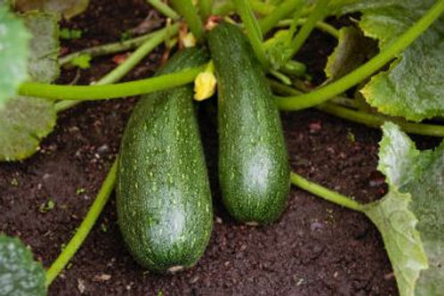 Zucchini Pack
