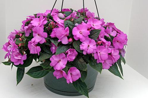 New Guinea Impatiens Purple Hanging Basket