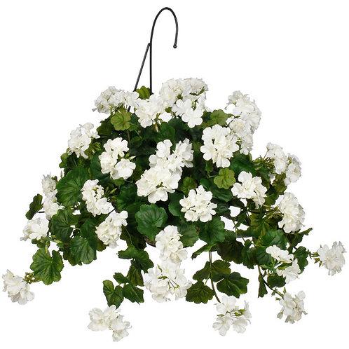 Geranium Hanging Basket: White