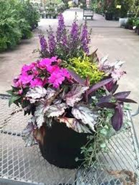 Mother's Day Mixed Planter: Sun