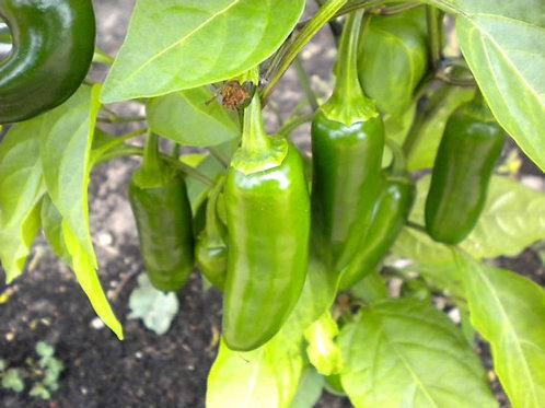 Jalapeno Pepper Pack
