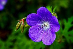 violet-flower.jpg