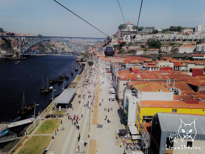Tour do vinho do Porto para famílias