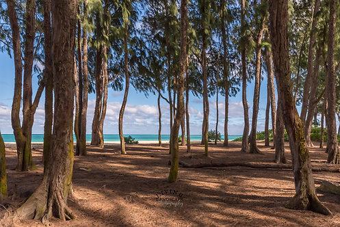 Ironwood Forest