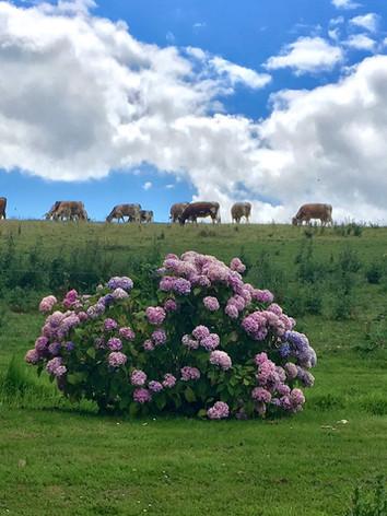 cowsflowers.jpg