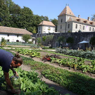 Köksträdgård väcker 1700-talet till liv – Château de Prangins