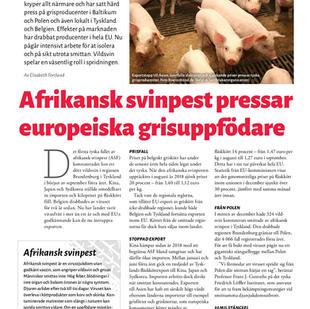 Afrikansk svinpest pressar uppfödare