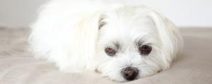 Prestige Pet Insurance