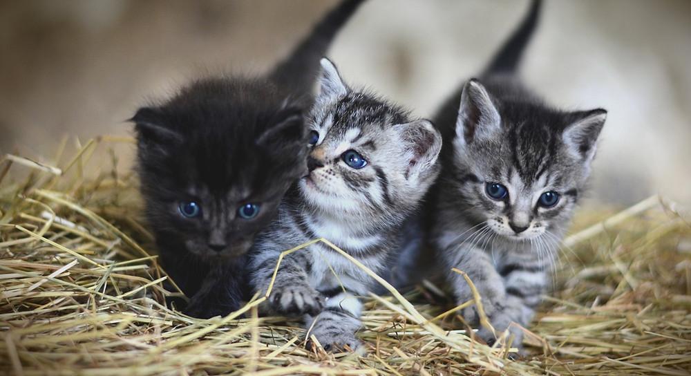 Cats - Prestige Pets Insurance
