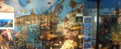 다양한 해양생물
