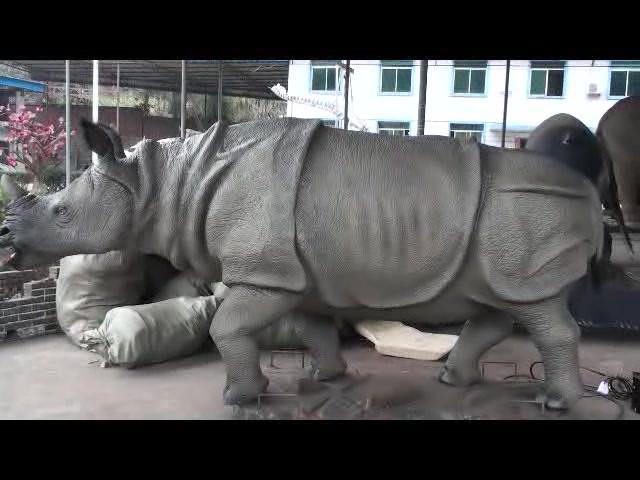 코뿔소犀牛.mp4