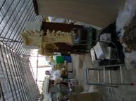 어류박제-국토201111.JPG