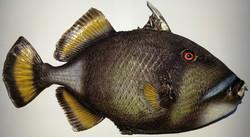 어류(국외종)