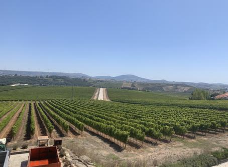 Pelas vinícolas de Torres Vedras