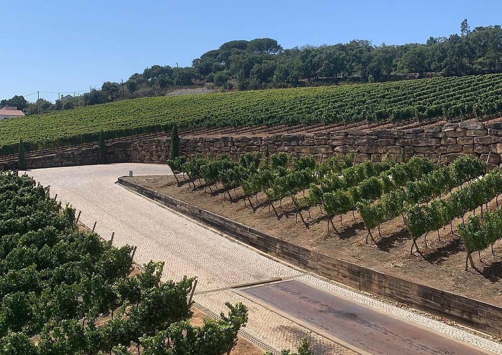 Uma parte das vinhas da AdegaMãe