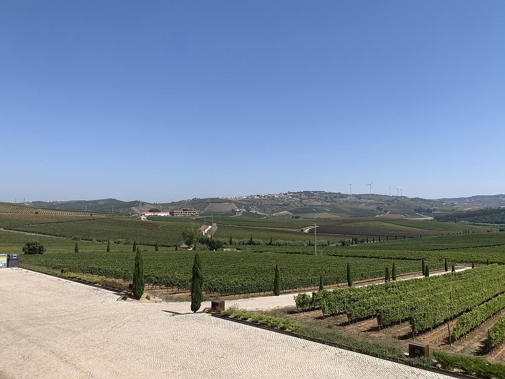 São muitas as vinícolas de Torres Vedras
