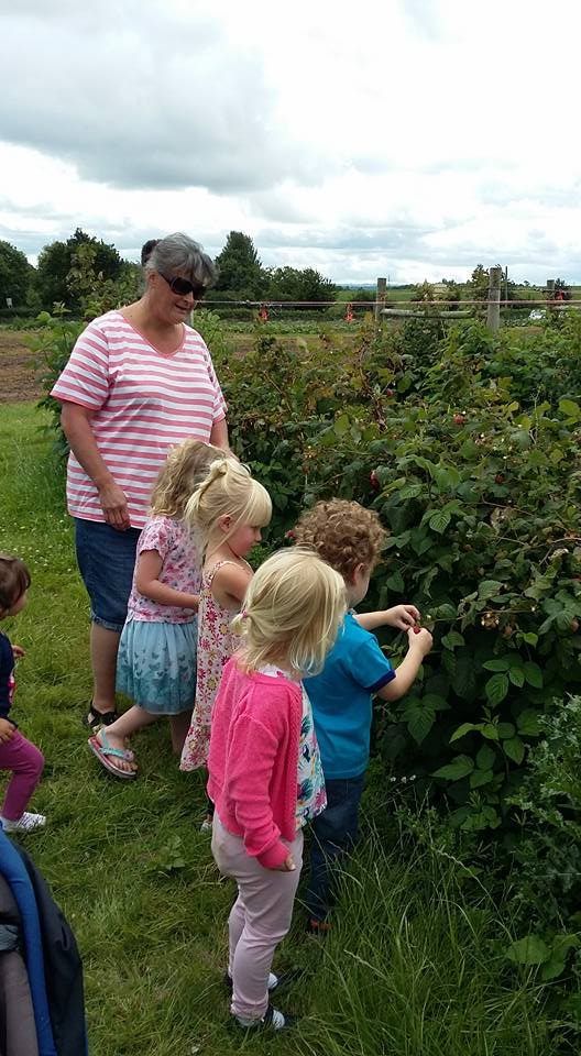 Picking our own strawberries