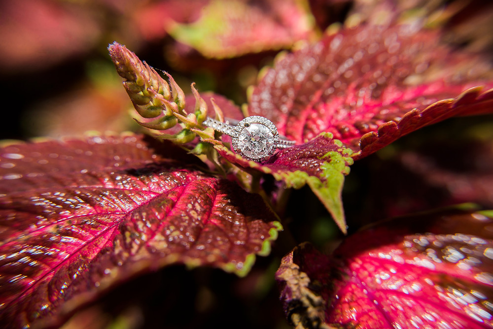 engagement ring in prescott park portsmouth new hampshire by maine wedding photographer paradis photography