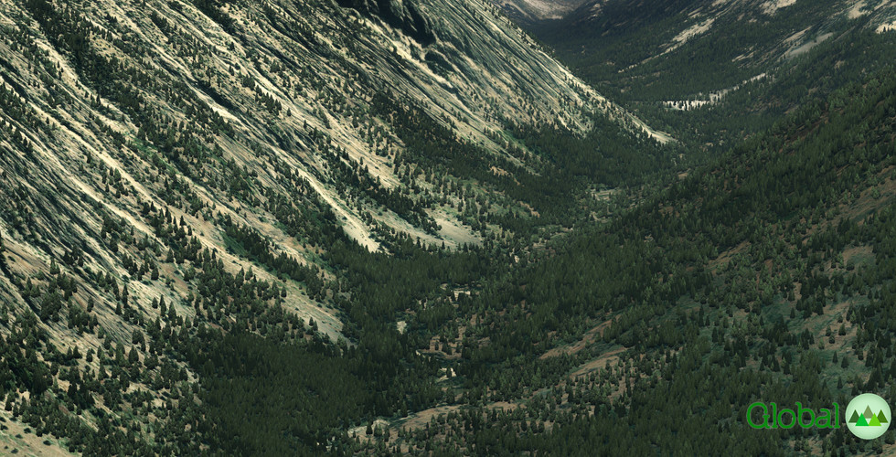 Global_Forests_RockyMountains.jpg