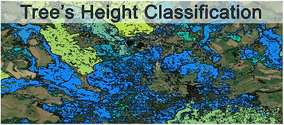 Tree_Height_Classification.jpg