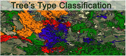 Tree_Type_Classification.jpg