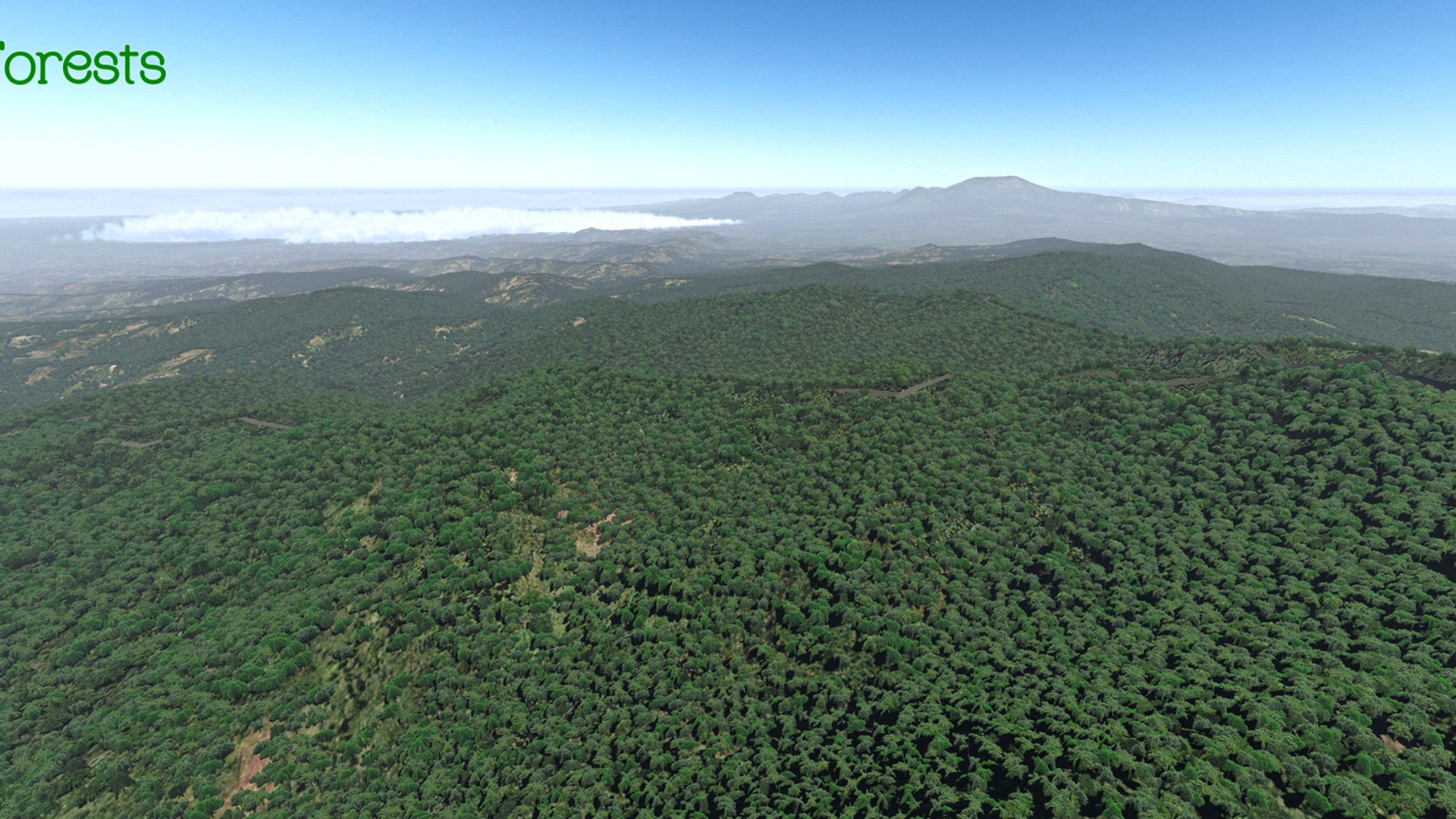 Global_Forests_Mexico.jpg