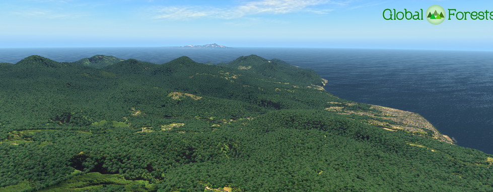 Global_Forests_Carribean3.jpg