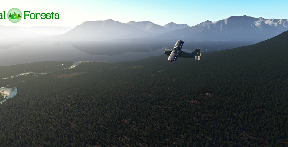 Global_Forests_Alaska2.jpg