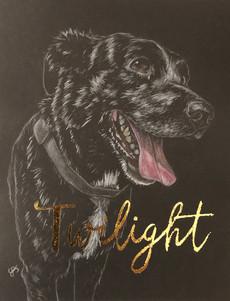 A doggo named Twilight