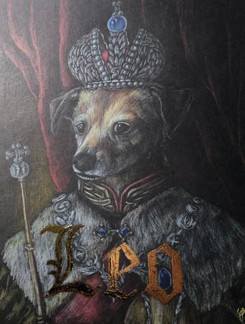 A fancy doggo named Leo
