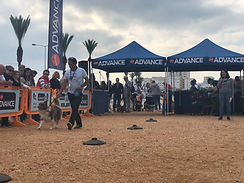 Desfile Canino 2018 83.jpg